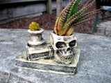 skull and books succulent planter