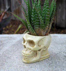 bone colored skull succulent planter