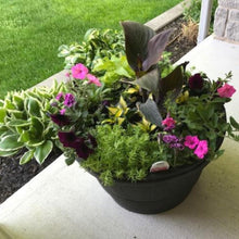 Load image into Gallery viewer, Pot-Side Planting Service From Beyond The Arbour
