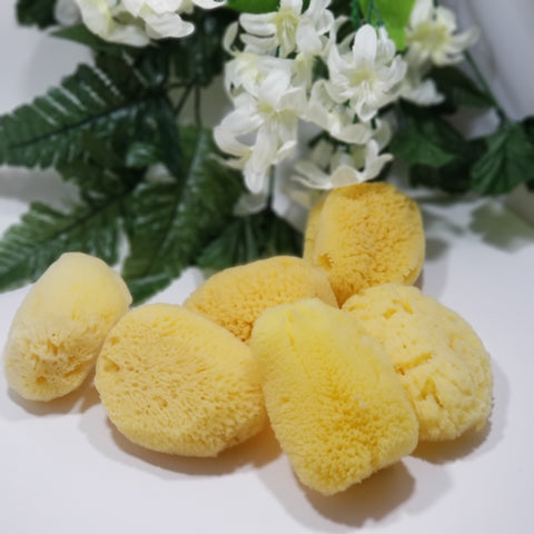 Yellow Natural Sea Sponge - Organik Beauty