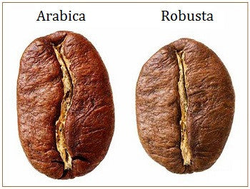What is the Difference Between Arabica and Robusta Coffee?