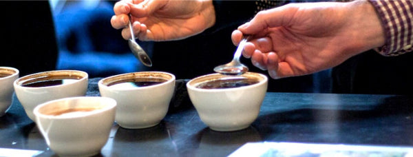 Coffee Cupping For Pleasure