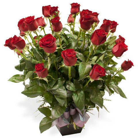 36-red-roses-pot_large