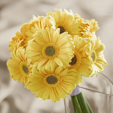 yellow-gerberas