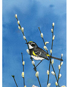 Spring Arrival.  Prints from original watercolor by Susan E. Quinlan. Yellow-Romped Warbler in spring pussy willows.