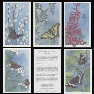 NORTHERN BUTTERFLY CARDS