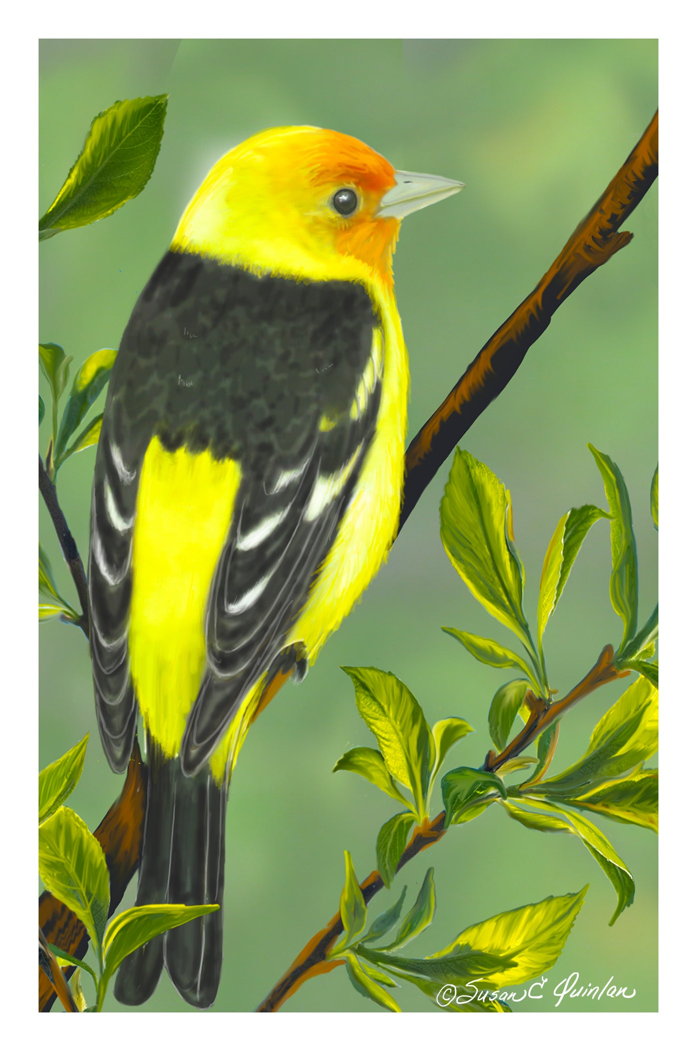 Spring Tanager