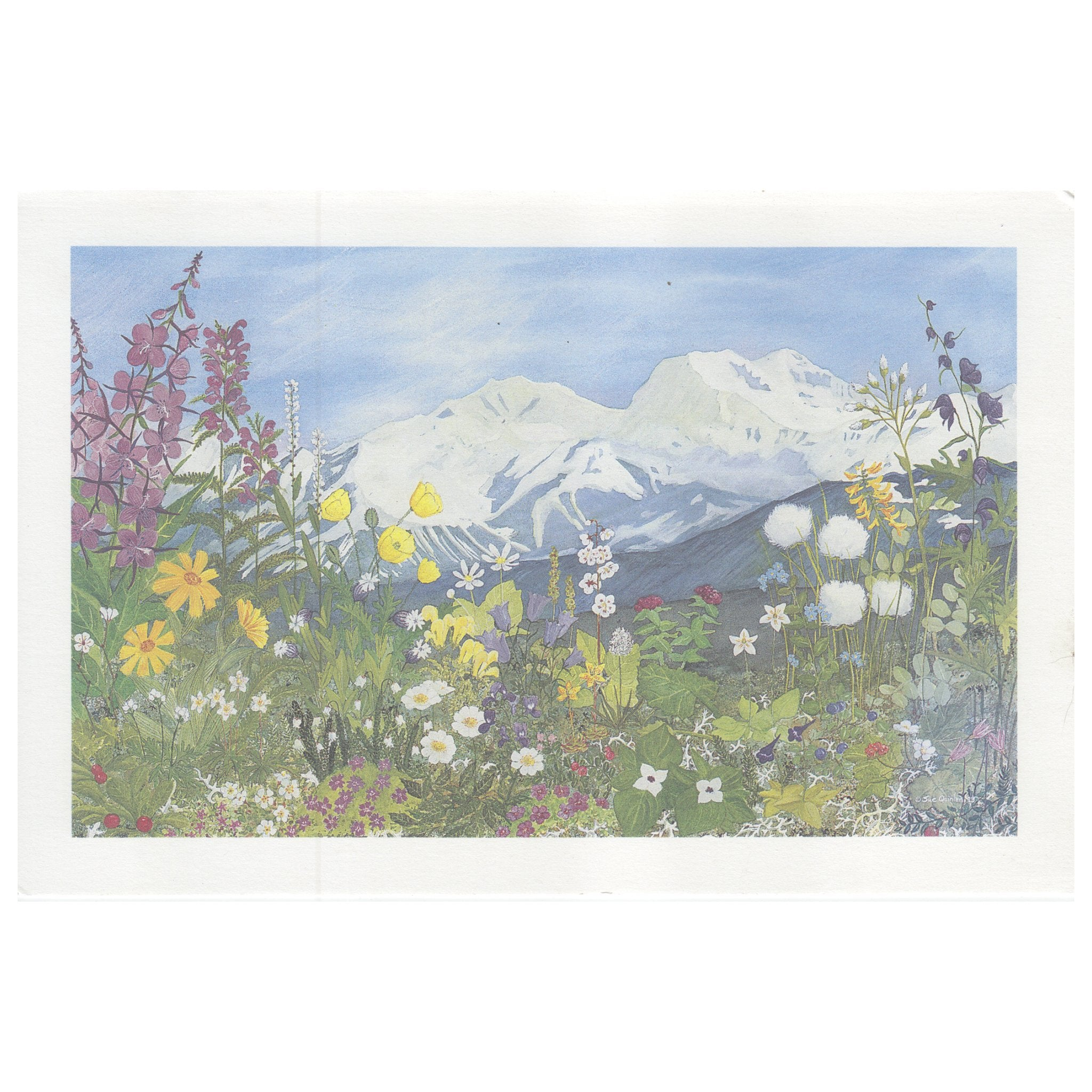 Tundra Wildflowers Print