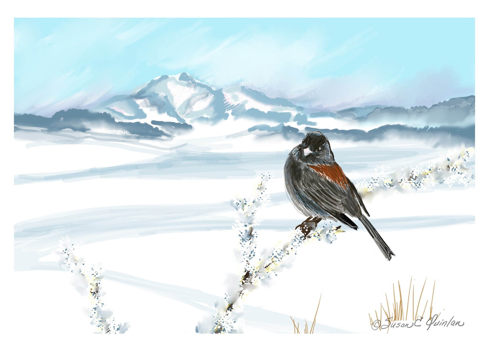 Winter with Junco