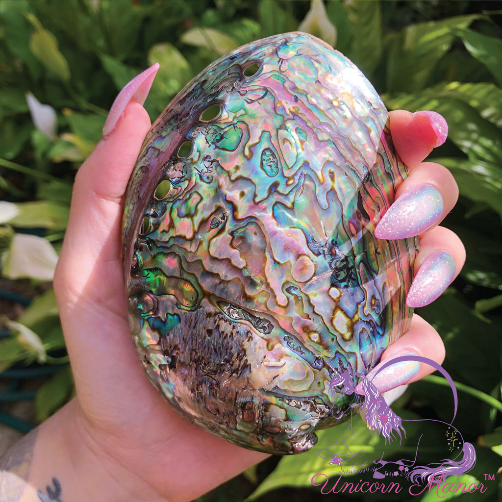 Abalone Mermaid Large Shell Natural