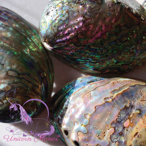 Abalone Mermaid Shell Natural