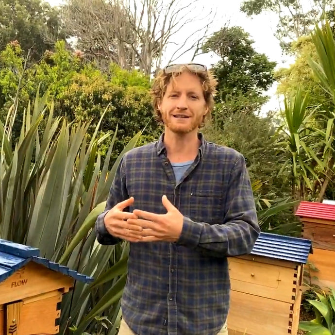 Expanding your apiary