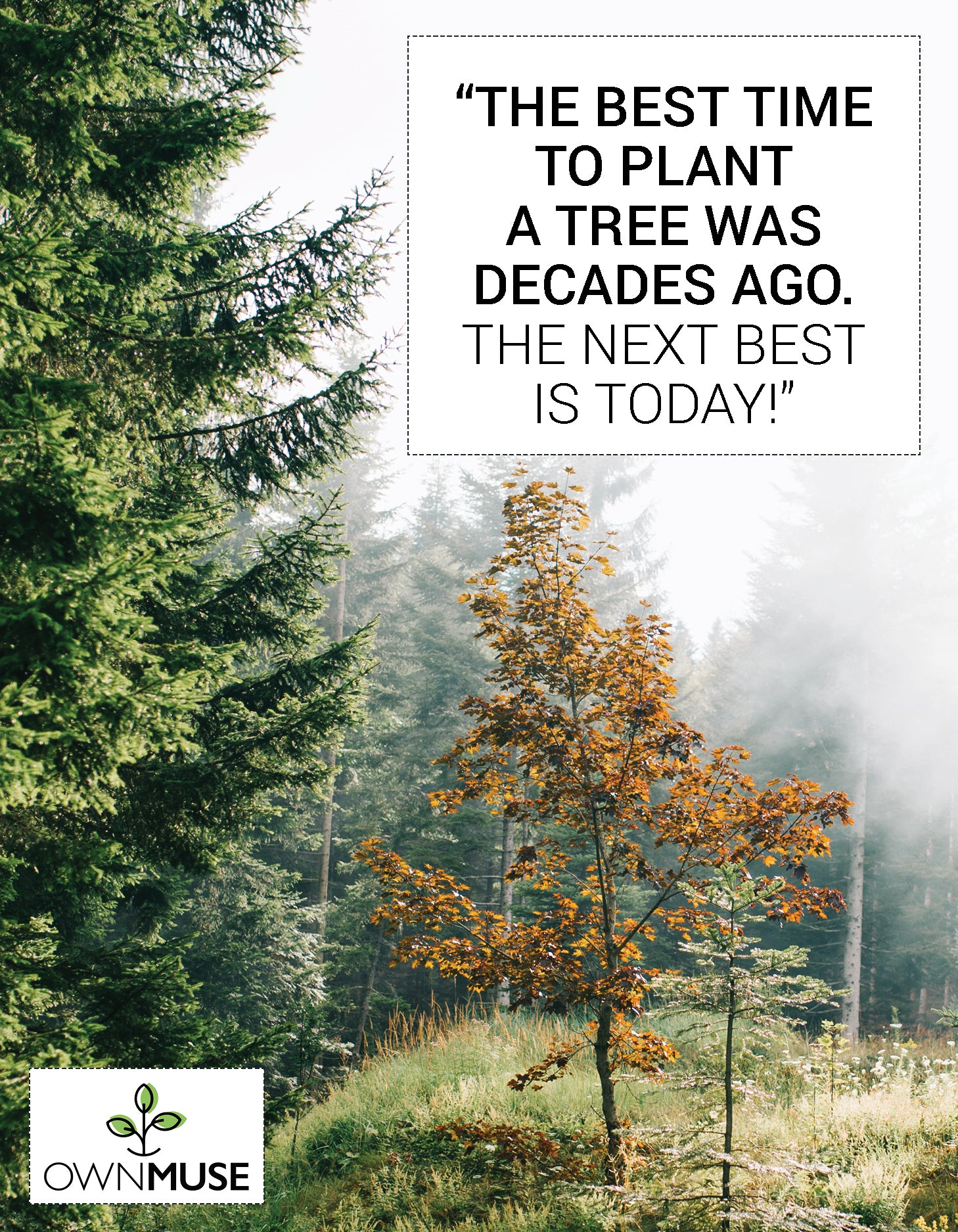 Environmental Quotes: Go Green Sustainable Messages - OwnMuse