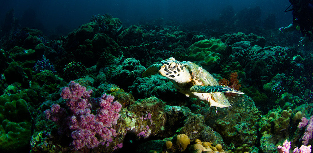 turtle swimming in ocean