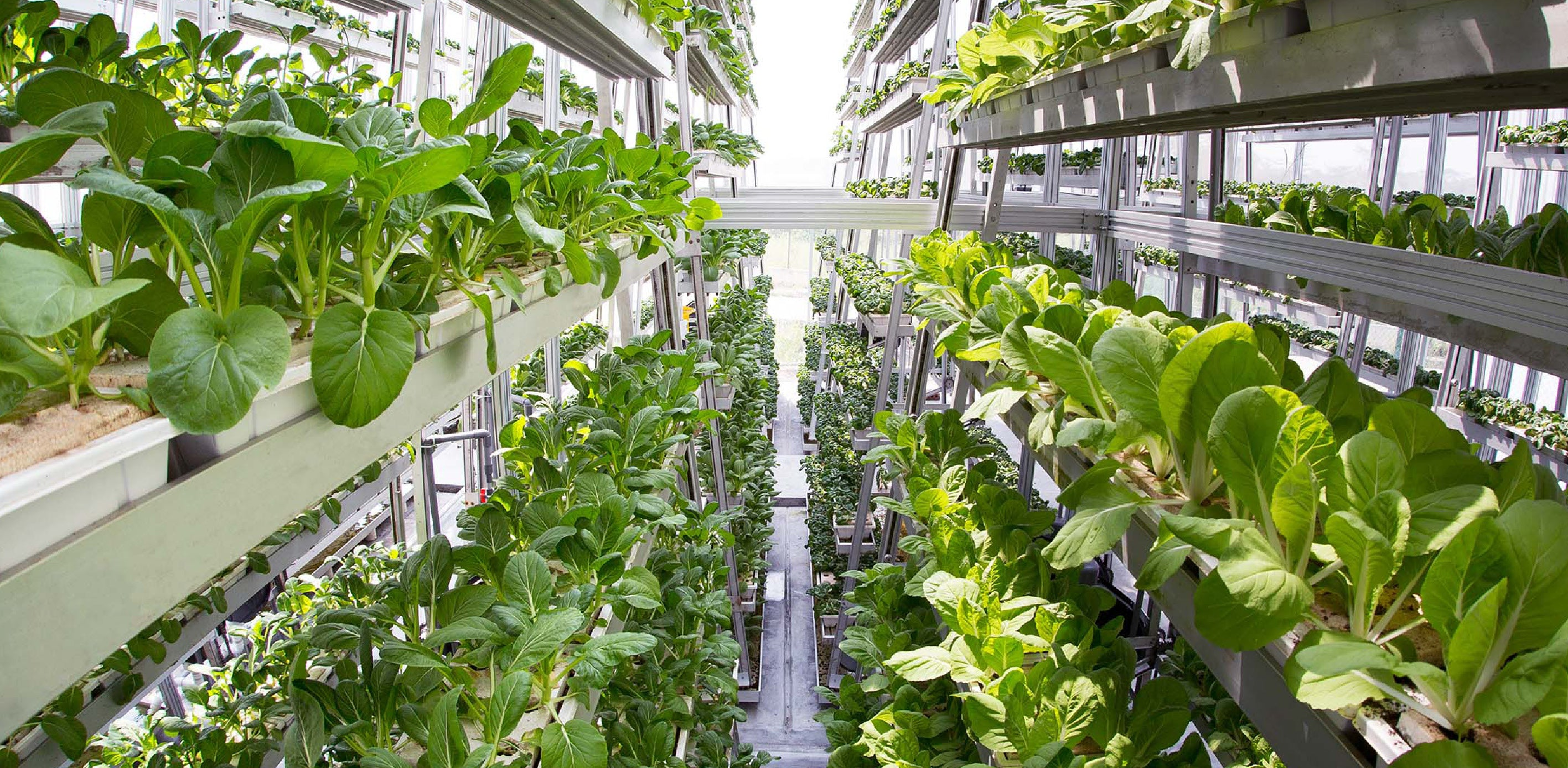 Are indoor vertical farms sustainable farming?