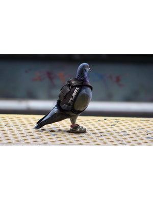 Ron Cruz Pigeon Print - 1 - Picture | Staple Pigeon