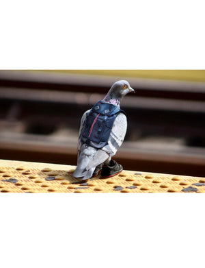 Ron Cruz Pigeon Print - 2 - Picture | Staple Pigeon