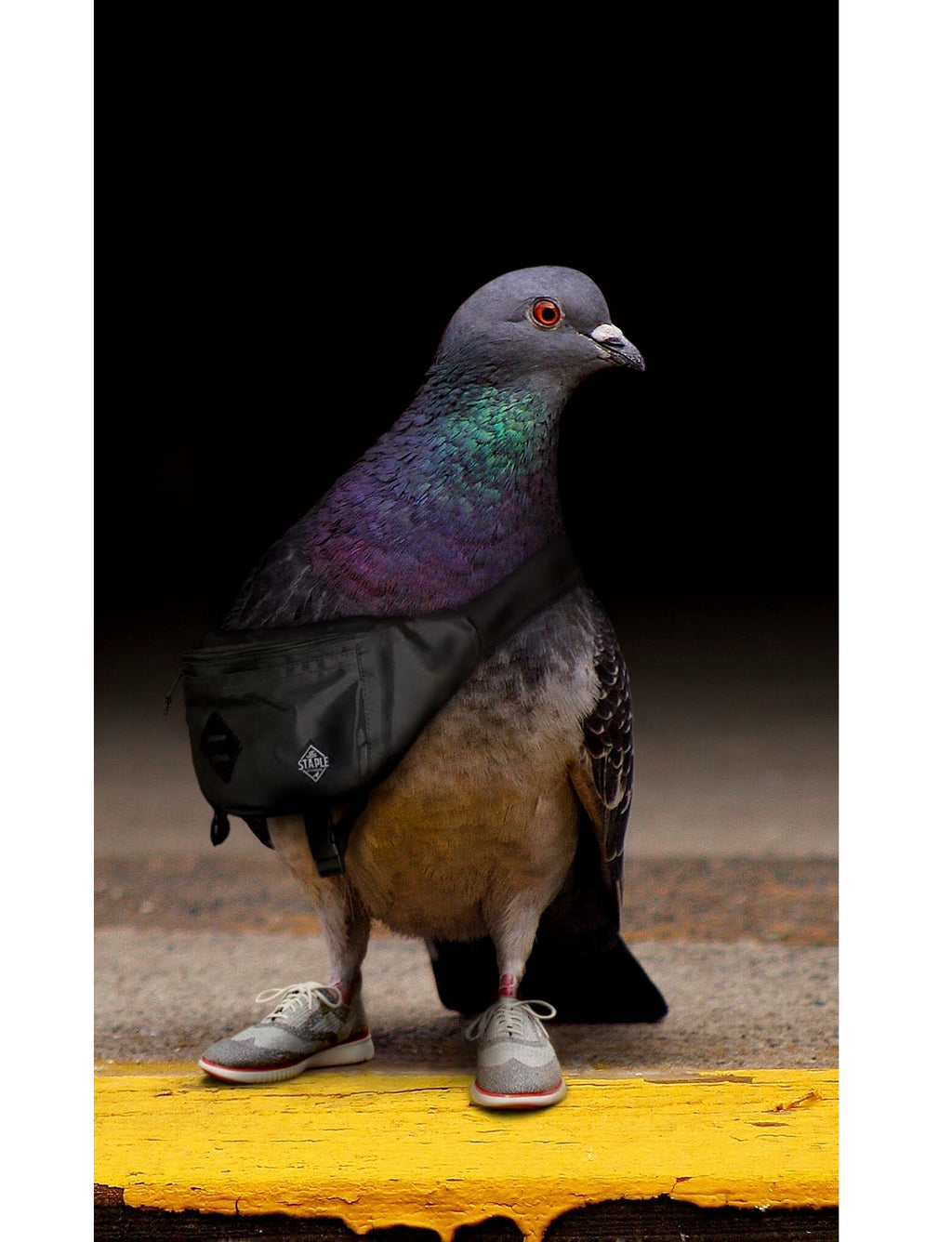 Ron Cruz Pigeon Print - 3 - Picture | Staple Pigeon