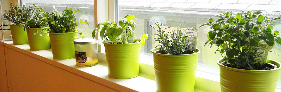 Indoor Herbs 101 - Tips for a Successful Harvest