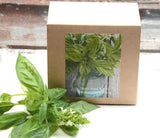 Sweet Basil Seed Kit