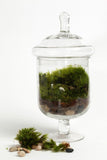 """Grazed & Confused"" - Glass Apothecary Jar Terrarium"