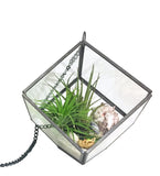 "Airplant Terrarium Kit - ""Instant Vacation"""