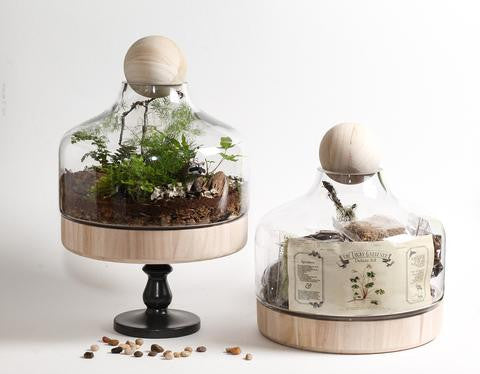 Deluxe DIY Terrarium Kit