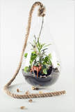 "Large Hanging Terrarium Kit - 16"" x 7"""