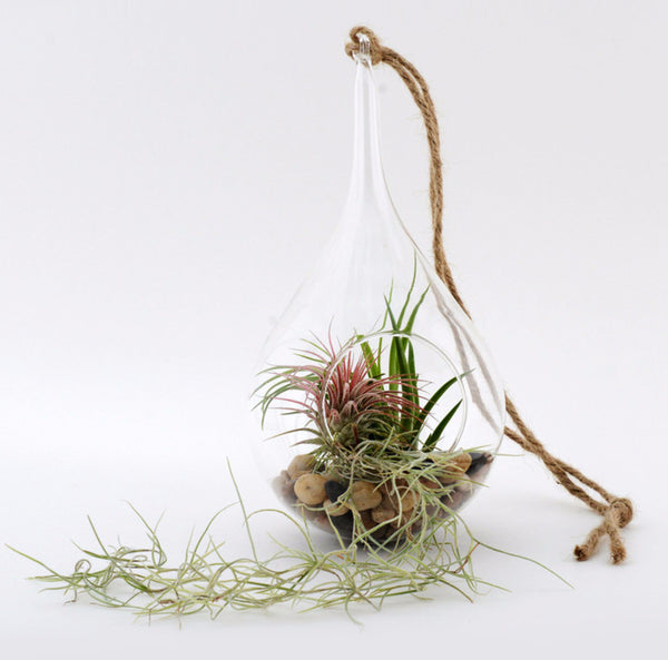 "Small Hanging Terrarium Kit - 7"" x 5"""