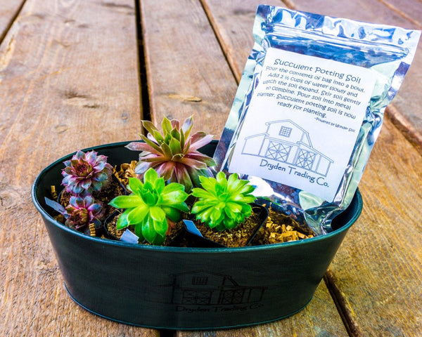 Succulent Garden Kit - 4 Plants + Wondersoil