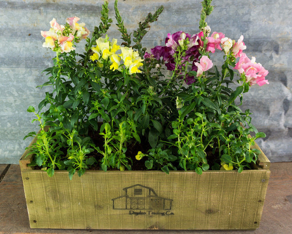 Herb Kit Planter Box - Cascade Green