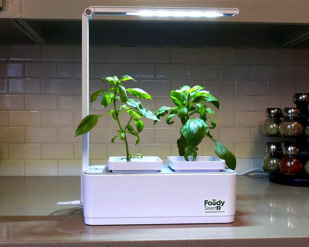 Lighting Tips For Successfully Growing Herbs Indoors