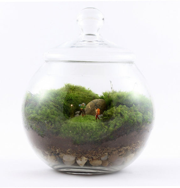 "Glass Terrarium - ""Uncharted Territory"""