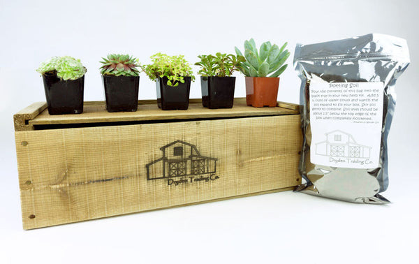 "Succulent Planter Kit - 5 Plants in 17"" x 7"" x 6"" Wood Planter Box"