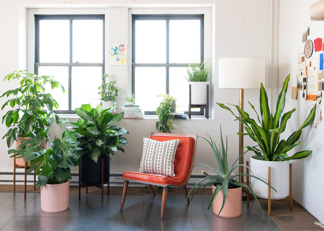 How-to: Repot your Houseplant with EcoVibe Home