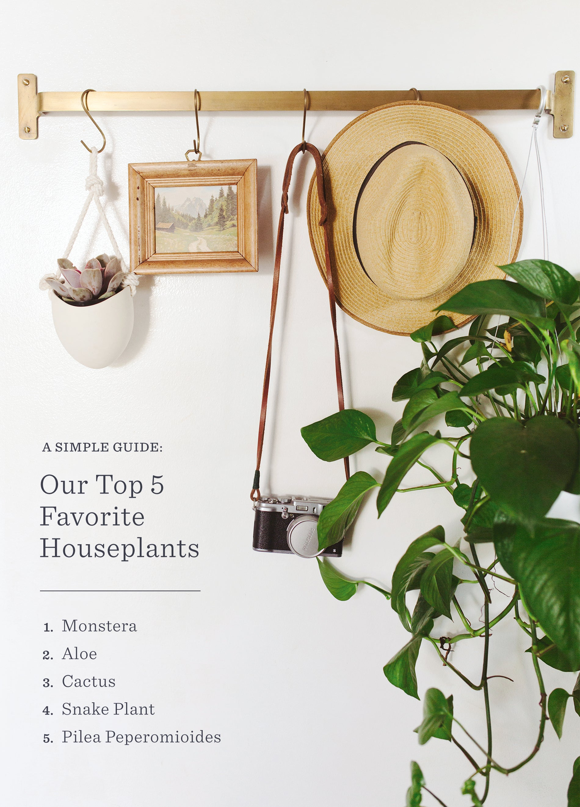 Our Top 5 Favorite Houseplants   house Product Houseplants on