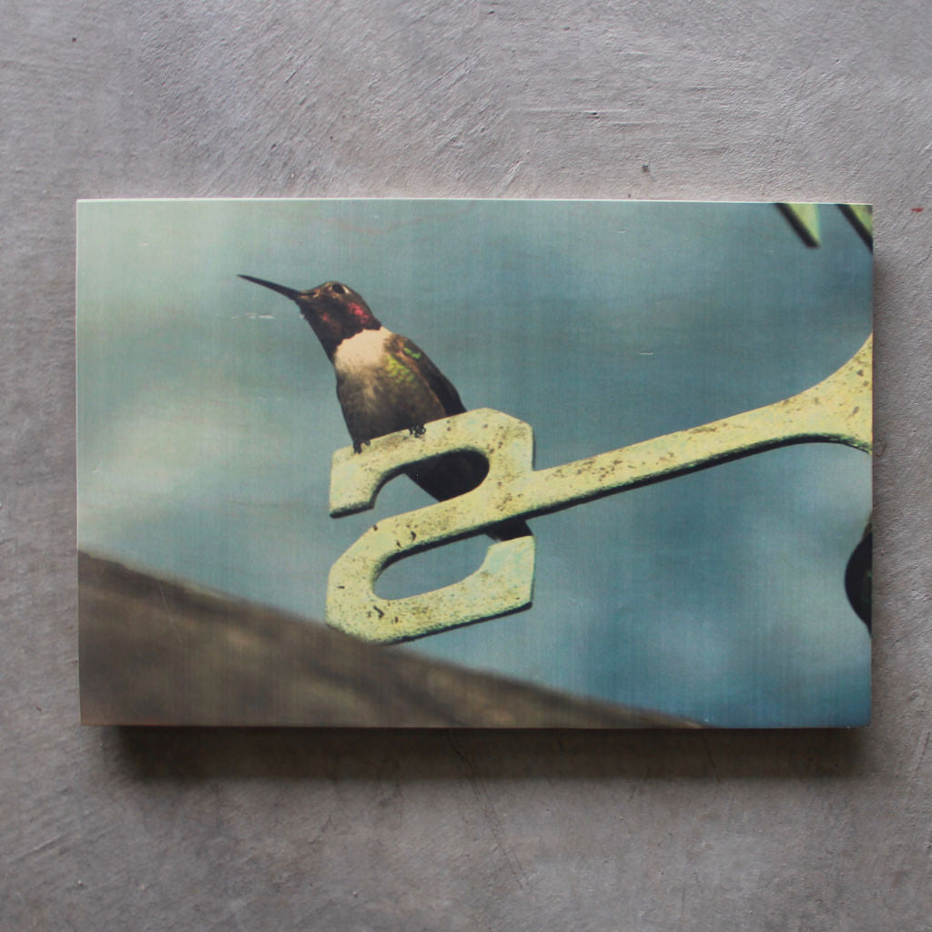 Rustic print Humming Bird - Unlimited 83