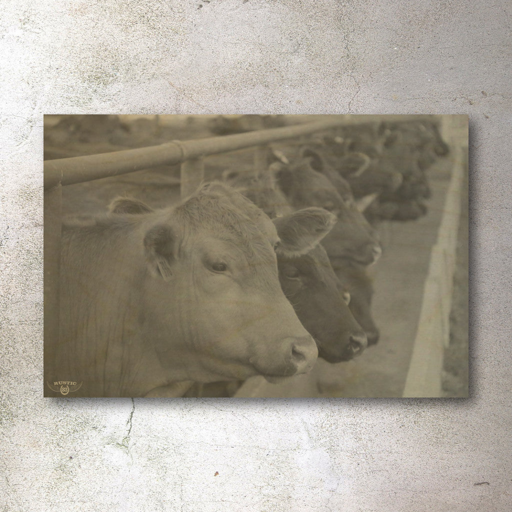 Rustic print of cattle - Unlimited 83