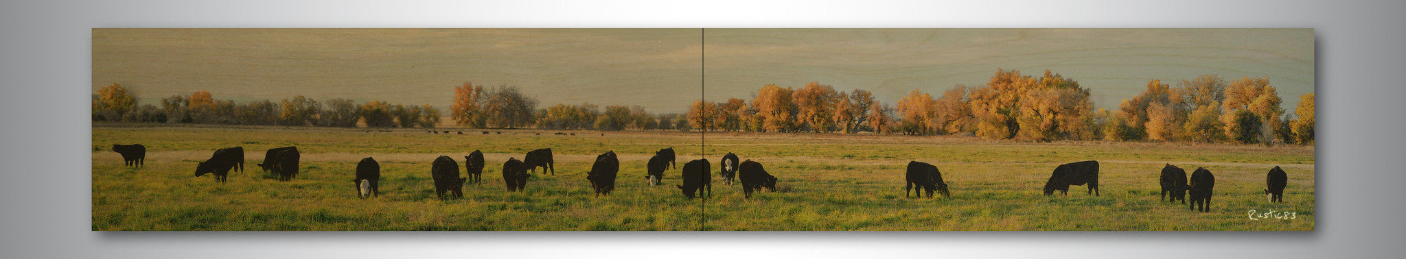 Grazing Cattle wood print - Unlimited 83