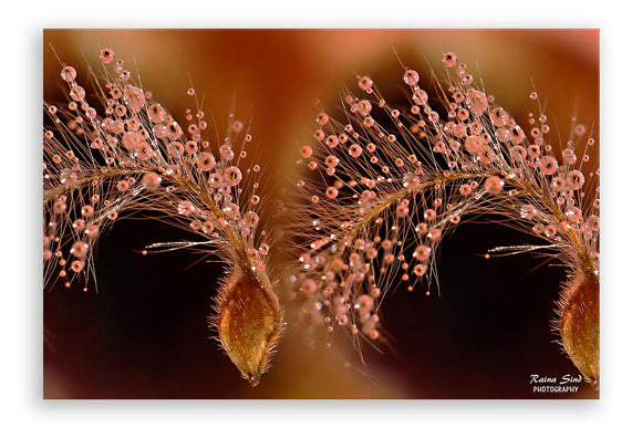Fireflowers - Photography Canvas Art Print