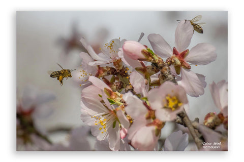 Spring - Photography Canvas Art Print