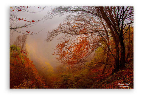 Autumn - Photography Canvas Art Print