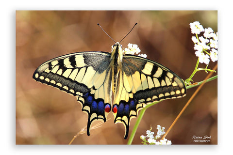 Butterfly - Photography Canvas Art Print