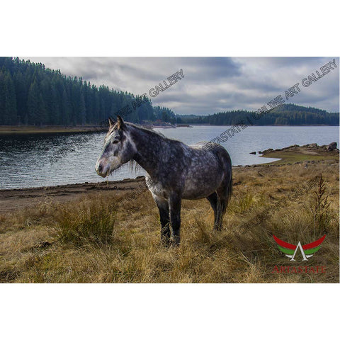 Horse, Digital Photo - Stock Image