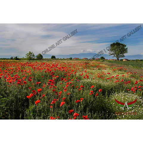 Poppies, Digital Photo - Stock Image