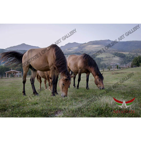Horses, Digital Photo - Stock Image