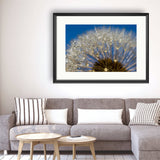 Dandelion - Photography Framed Art Print