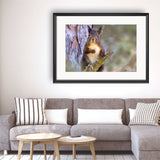 Squirrel - Photography Framed Art Print