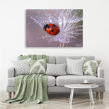 Ladybug - Photography Canvas Art Print