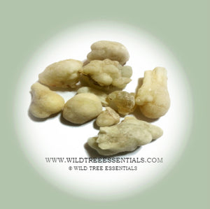Superior Bone White Hojari Frankincense  (Boswellia sacra) - Wild Tree Essentials